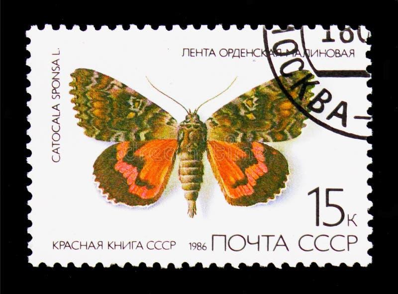 Dark Crimson Underwing (Catocala sponsa), Butterflies serie, cir royalty free illustration