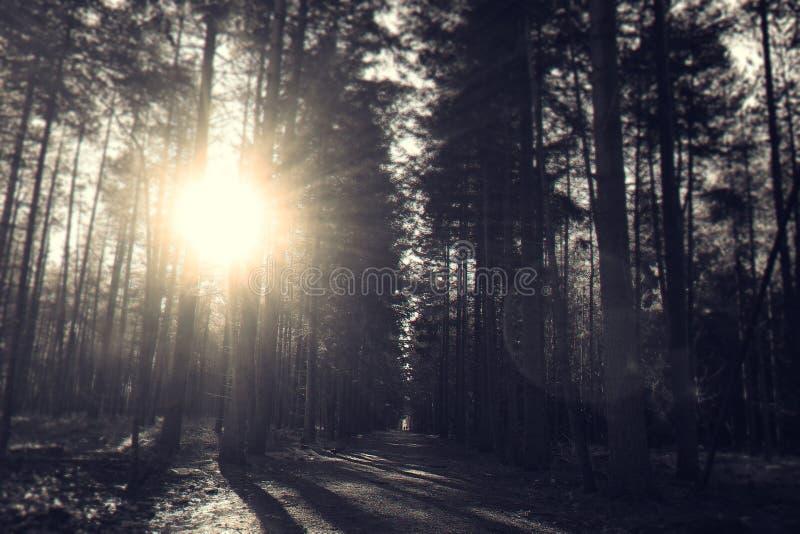 Dark, Dawn, Dirt royalty free stock image