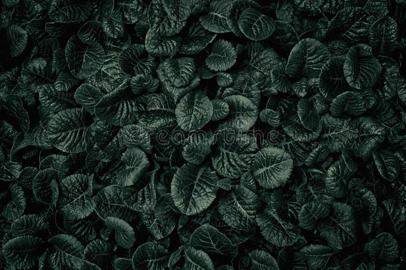 Dark Deep Green Leaves Texture Background Natural Background And