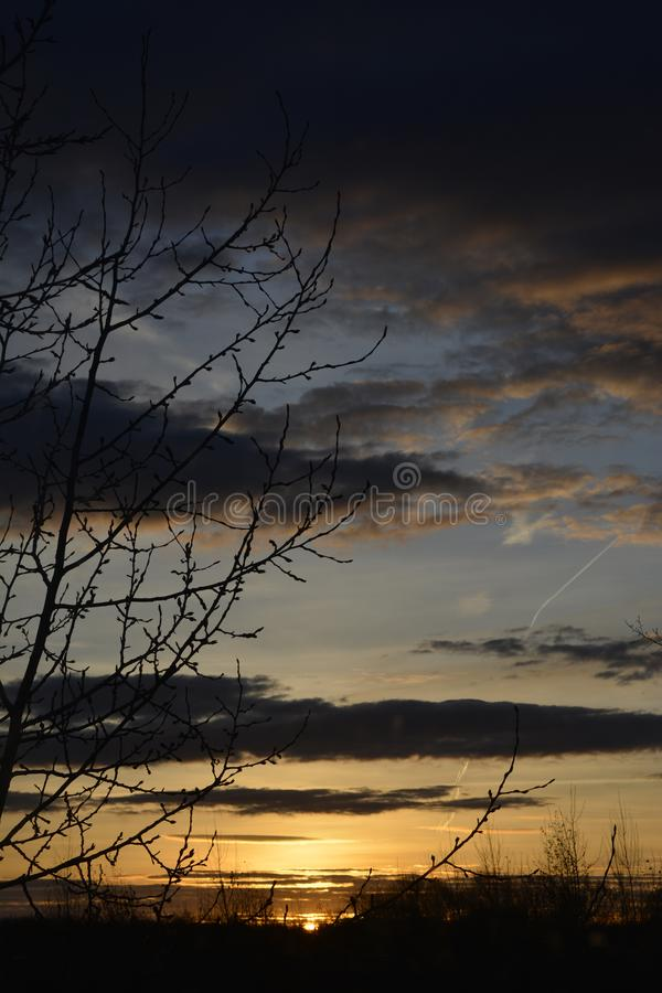 Dark dramatic sky on the sunrise. Branches silhouettes on the background of cloudy sky in the beginning of dawn stock photo