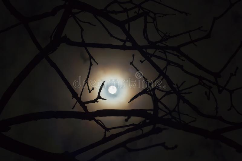 Dark enchanted photo of a full moon in the trees branches.Shining full moon in the night sky night mysterious landscape. stock photography