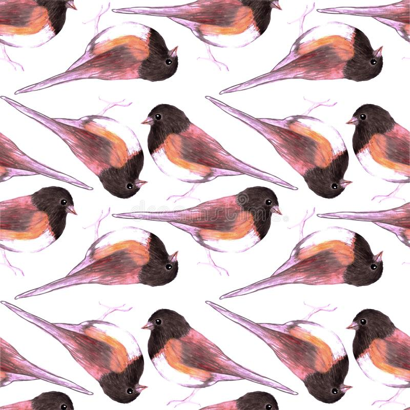 Dark eyed Junco or Junco hyemalis bird seamless watercolor birds painting background.  stock illustration