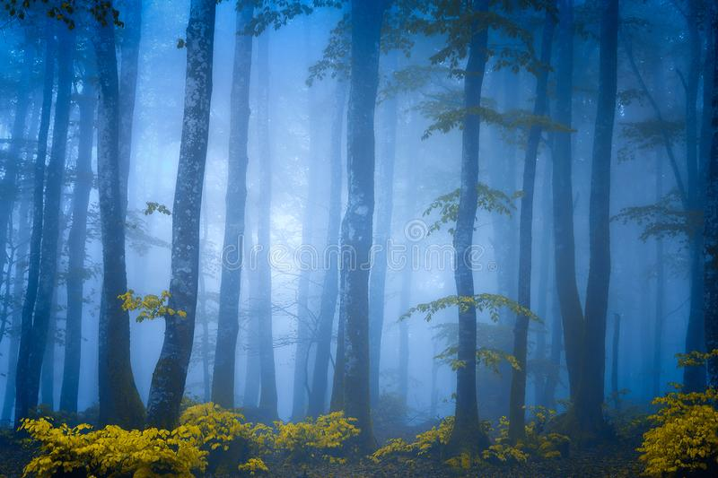 Dark fantasy forest with fog royalty free stock images