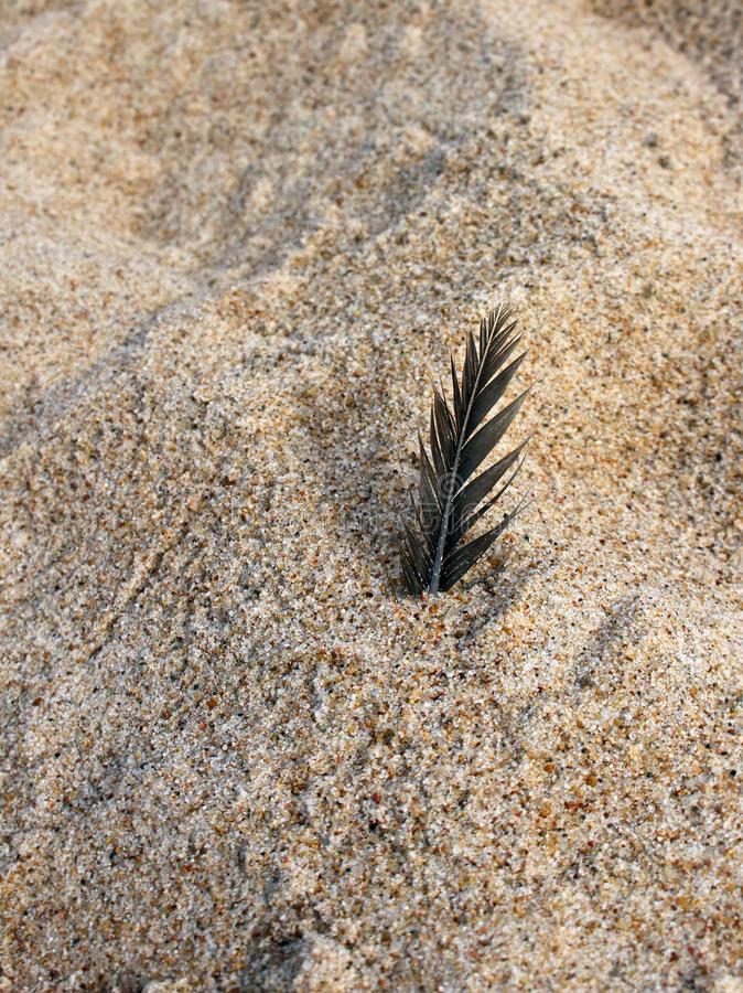 Dark feather in the rough beach sand texture stock photography