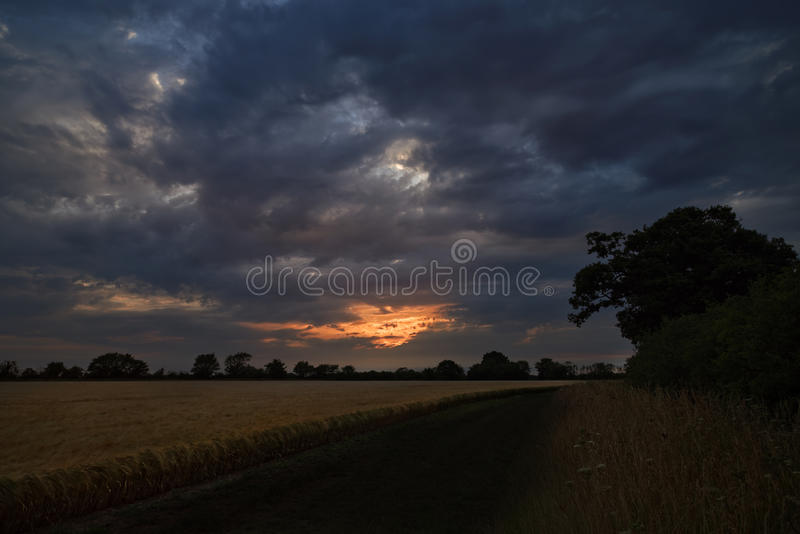 Dark Field of Barley and Trees with Stormy Sky. A dark. curved path disappears into the distance surround by a field of barley to the left and trees to the right royalty free stock image