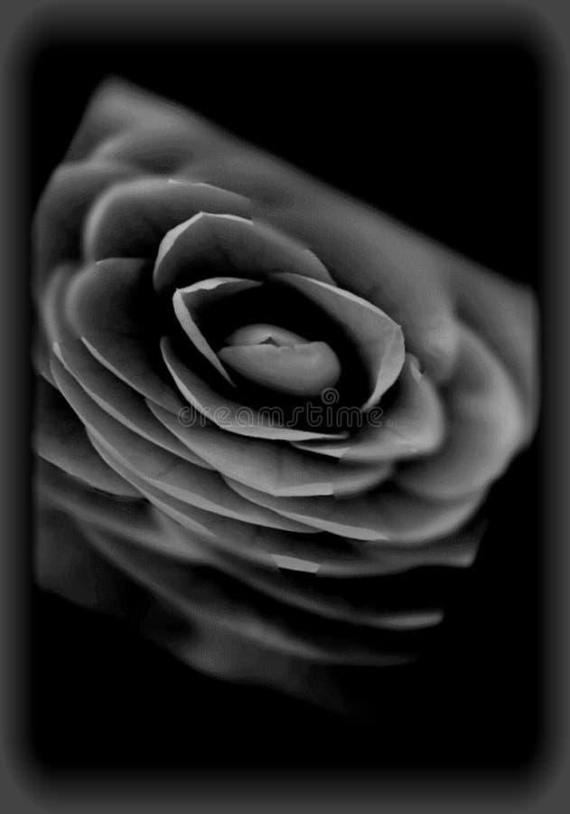 dark flower illustration stock photo