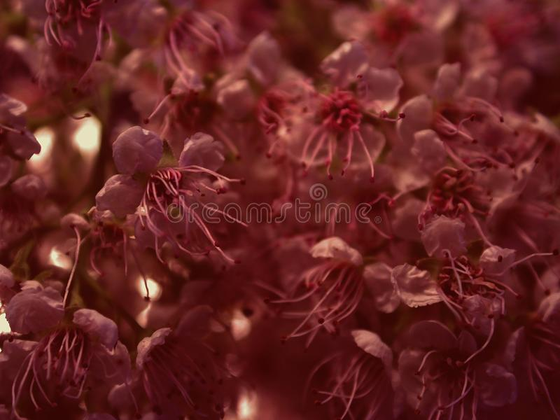 Dark Flower Petals Texture royalty free stock photos