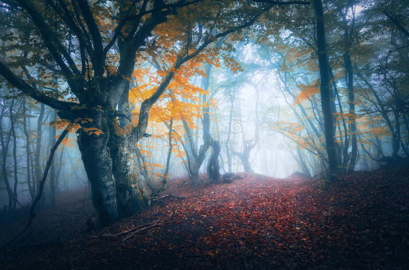 Dark fog forest. Mystical autumn forest with trail in blue fog royalty free stock photography