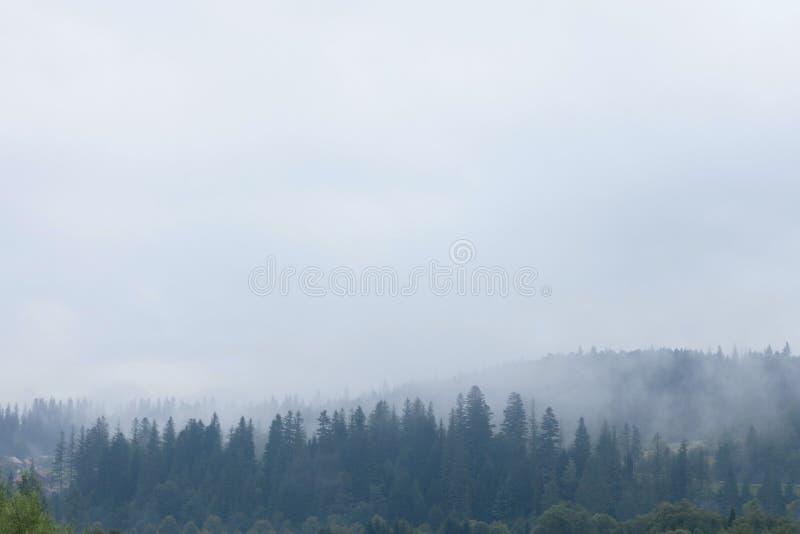Dark foggy forest, mist background. Nature pine tree stock photos