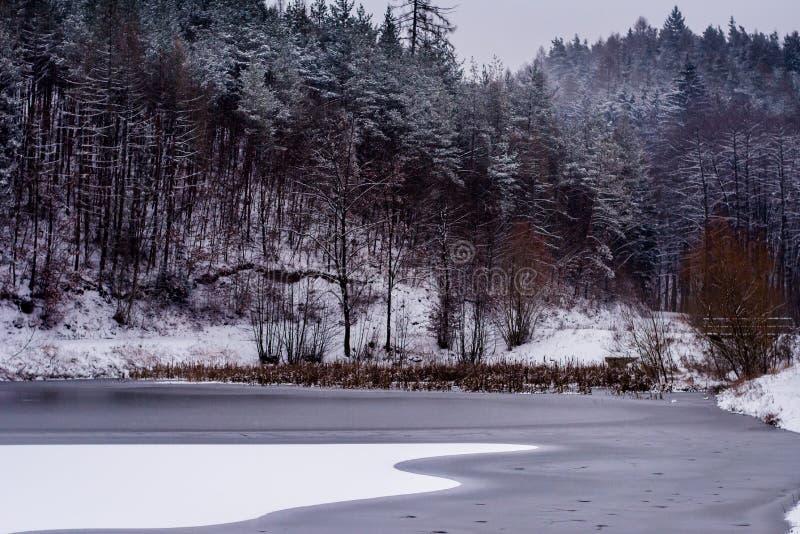 Forest in Czech Rebublic,. Dark and foggy forest near Lelekovice, Czech Republic, Europe royalty free stock photos