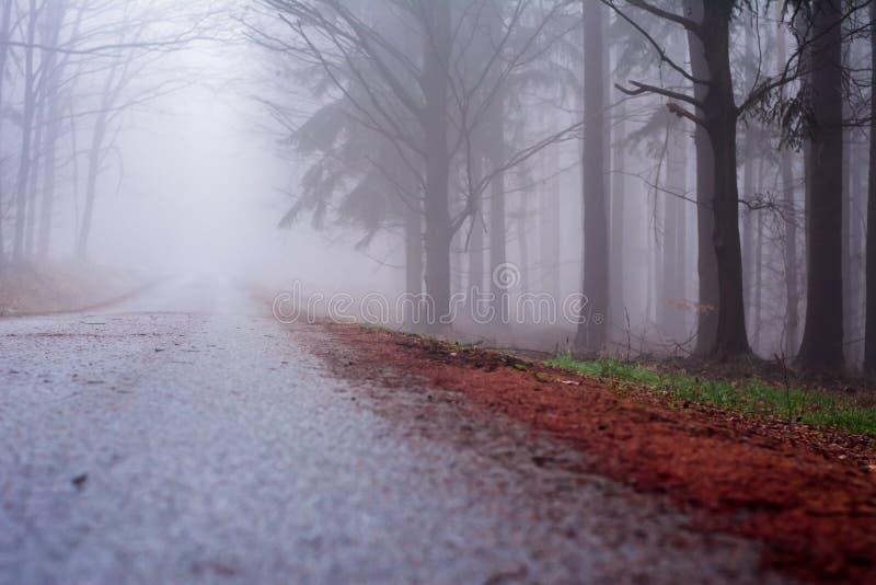 Forest in Czech Rebublic,. Dark and foggy forest near Lelekovice, Czech Republic, Europe royalty free stock photo