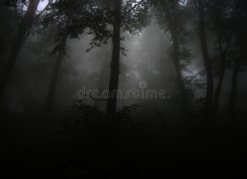 Dark foggy leafy forest stock photos