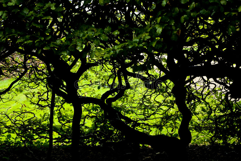 Dark foliage and twisted trees stock image
