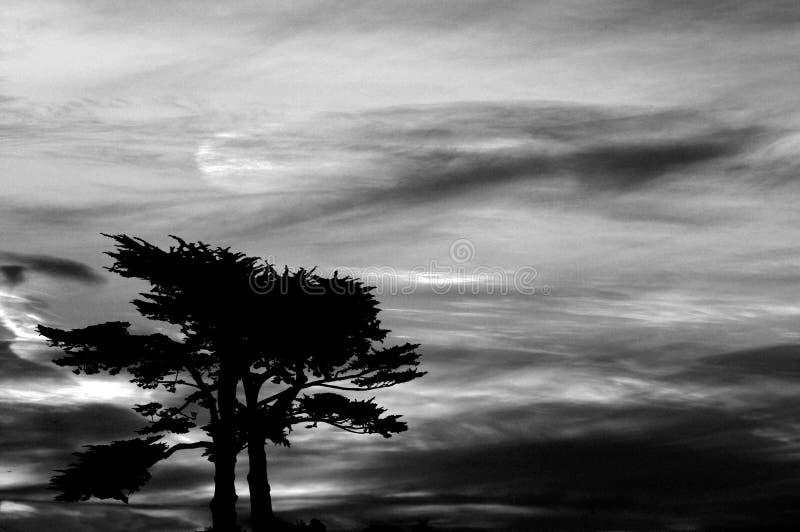 Dark foreboding sky over cypress tree royalty free stock photography