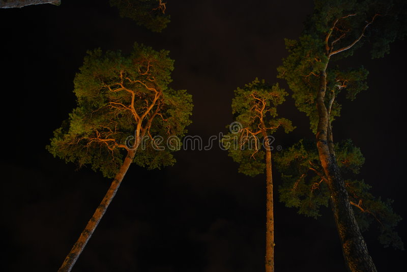 Dark forest. Long exposure of a dark forest - rescue rainforest stock photography