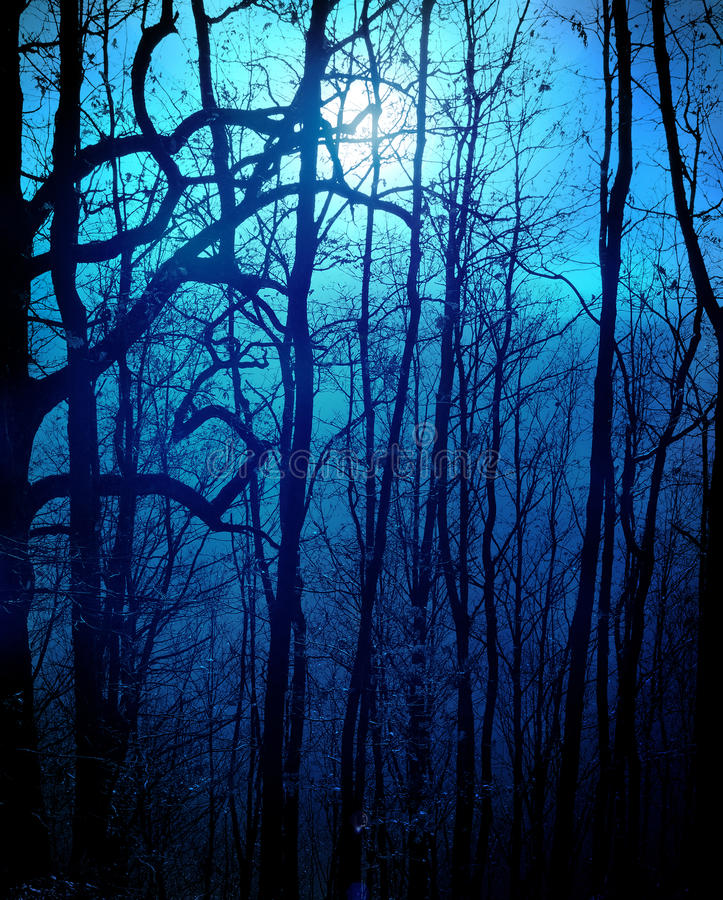 Download Dark forest stock illustration. Image of mysterious, backdrop - 22506937