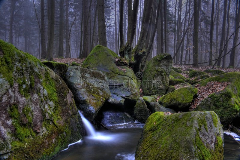 Download Dark Forest Royalty Free Stock Photography - Image: 4772147