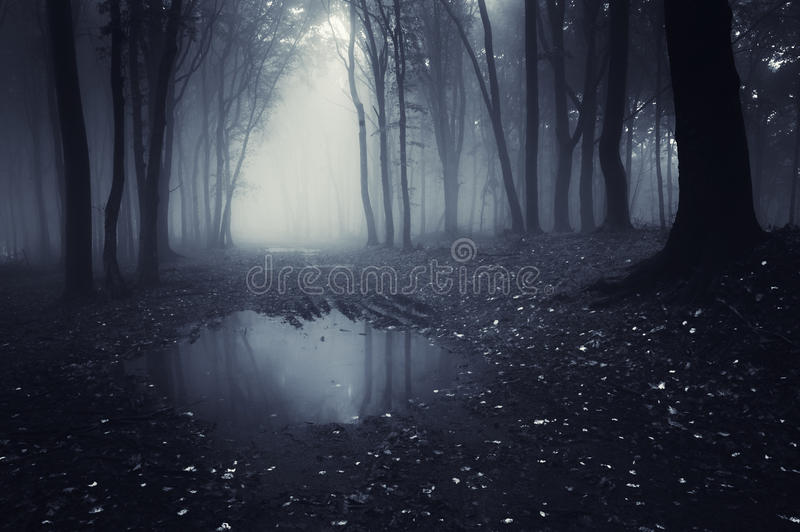 Dark forest with blue fog and lake stock photography