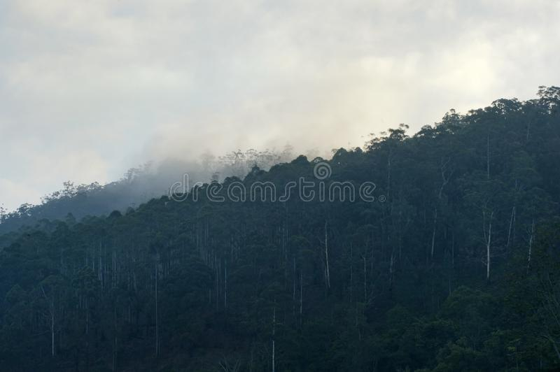 Dark forest and fog royalty free stock photos