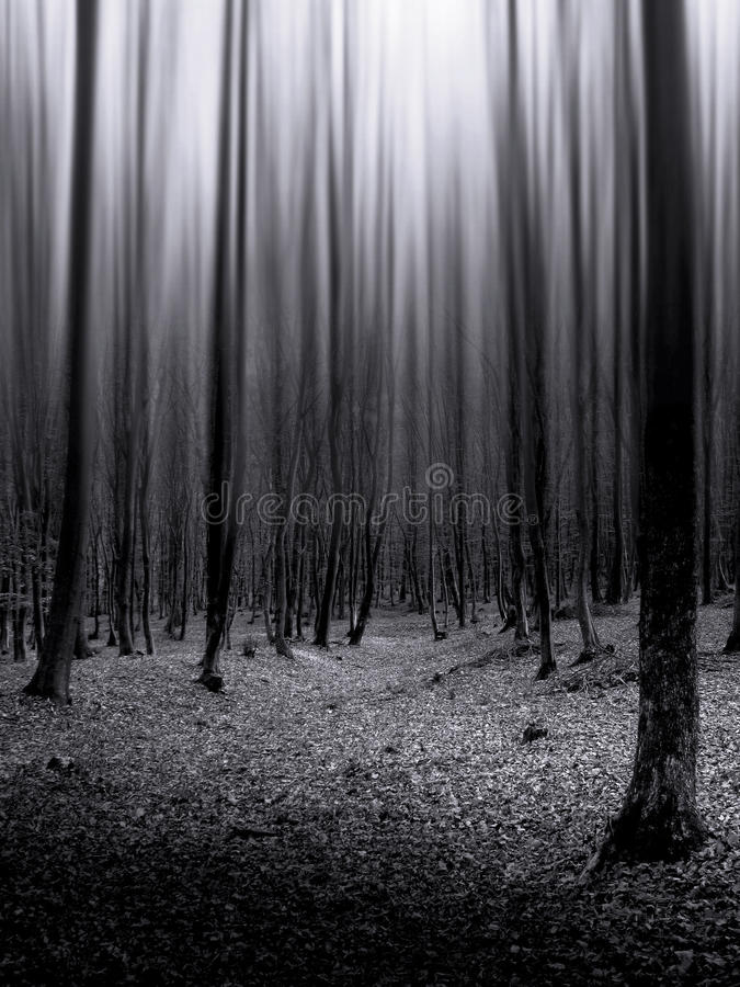 Download Dark Forest With Infinite Trees Stock Image - Image: 20980985