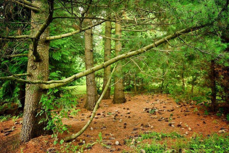 Dark forest. stock image
