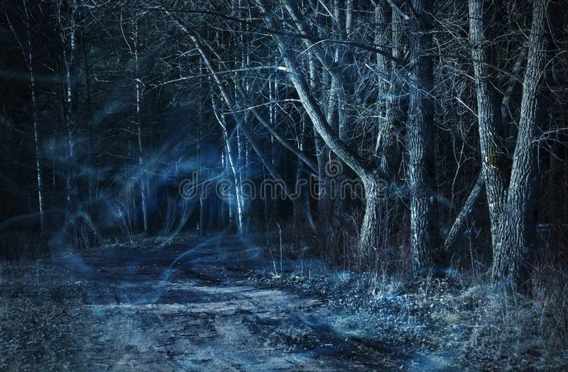 dark forest - nature and environment concept stock photography