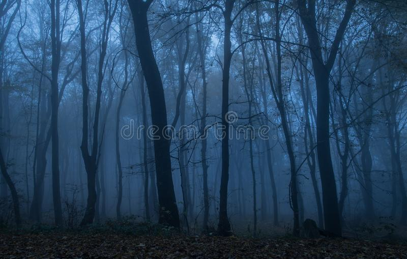 Dark forest at night. Blue toned photo stock images