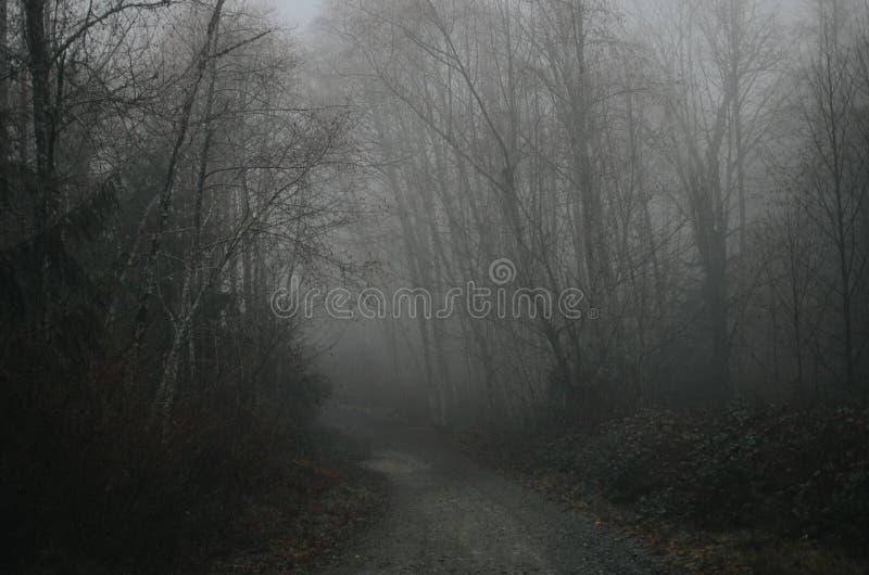 Dark Forest Free Public Domain Cc0 Image