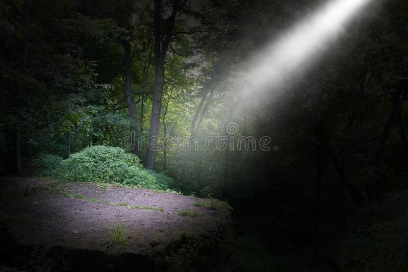 Dark forest, ray of light background stock images