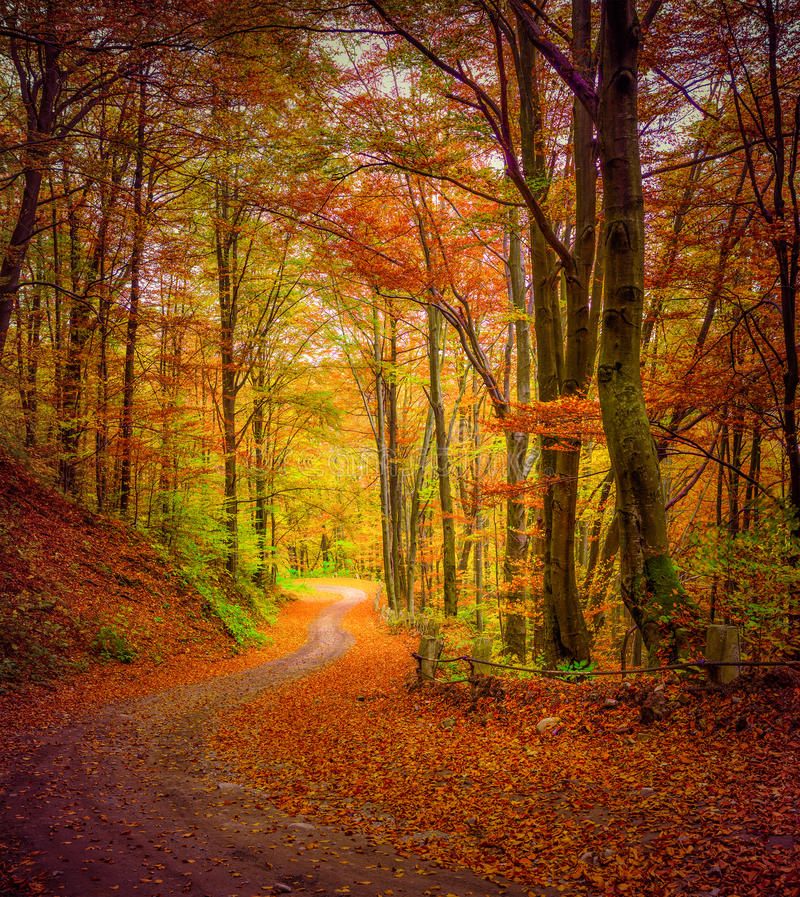 Free Dark Forest Road In The Autumn Forest. Stock Image - 45835681