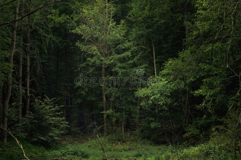 Dark gloomy haunted forest on an autumn evening. Awesome landscape in the fairytale forest.  stock images