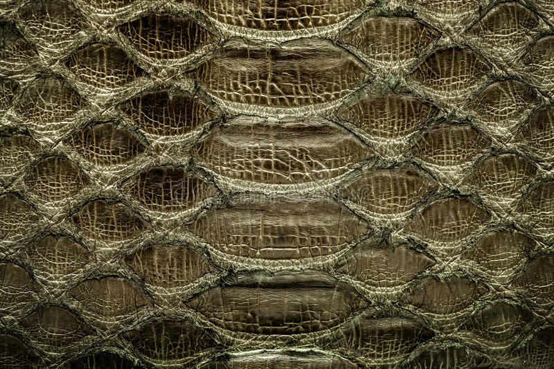Dark gold python leather, skin texture for background. royalty free stock image