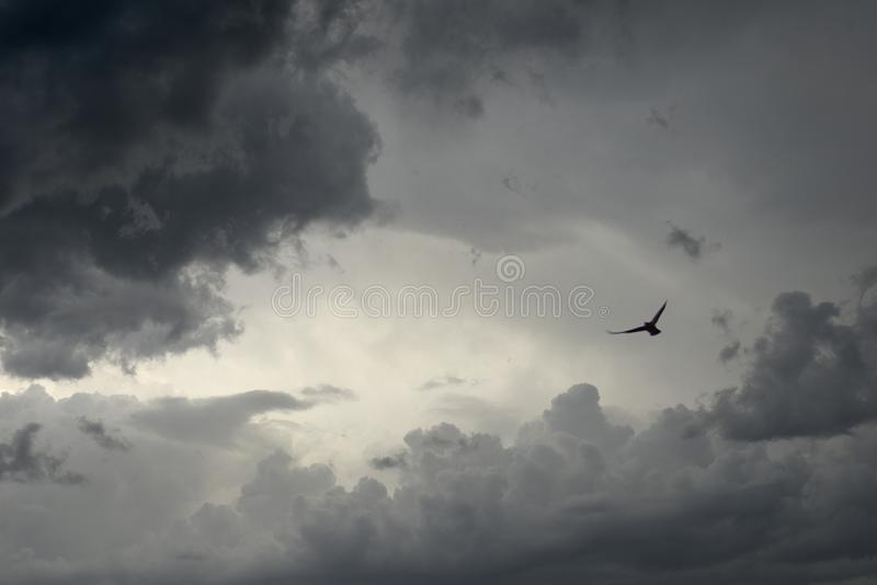 Thunder storm clouds. Dark gray dramatic sky with thunder storm clouds and birds silhouette royalty free stock photography