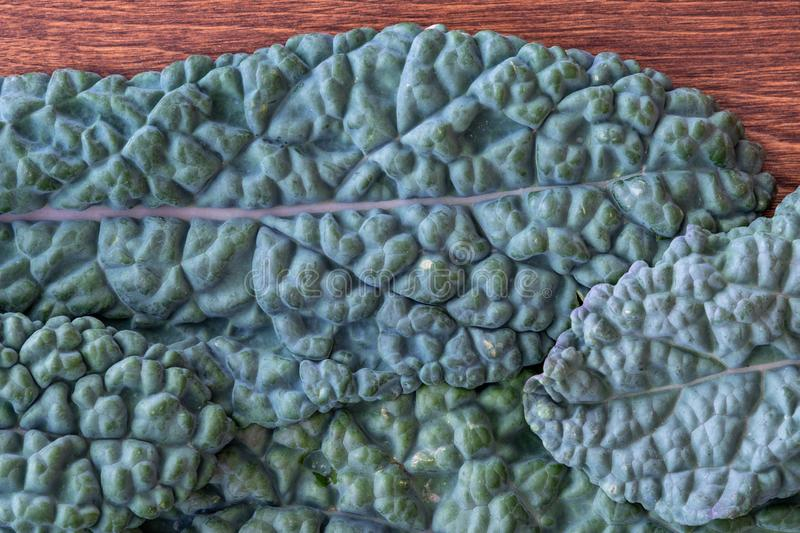 Dark green, crinkly, Lacinato Kale leaves, part of healthy lifestyle, as a textured natural background stock images