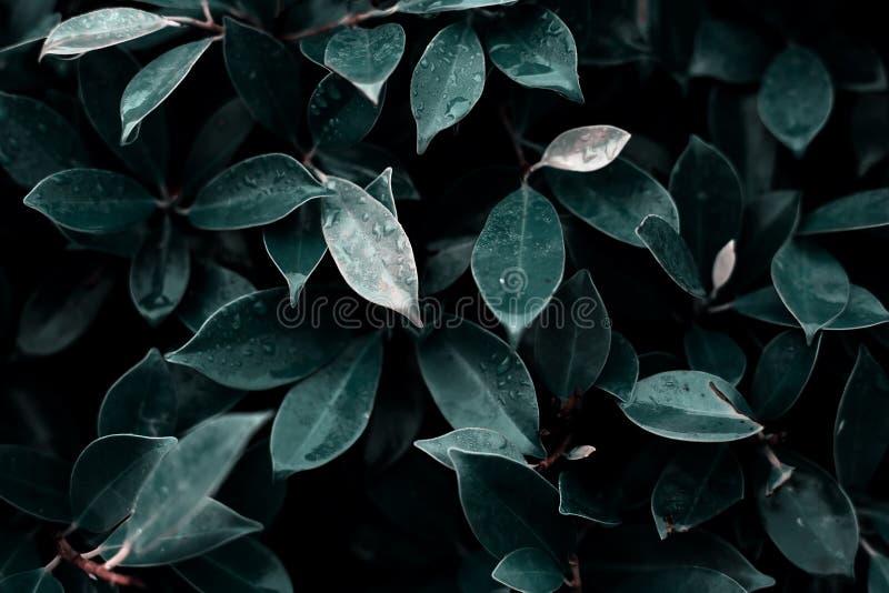 Dark green wet leaves stock photo