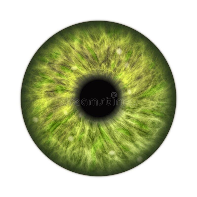 Dark green human iris. An illustration of a dark green human iris stock illustration
