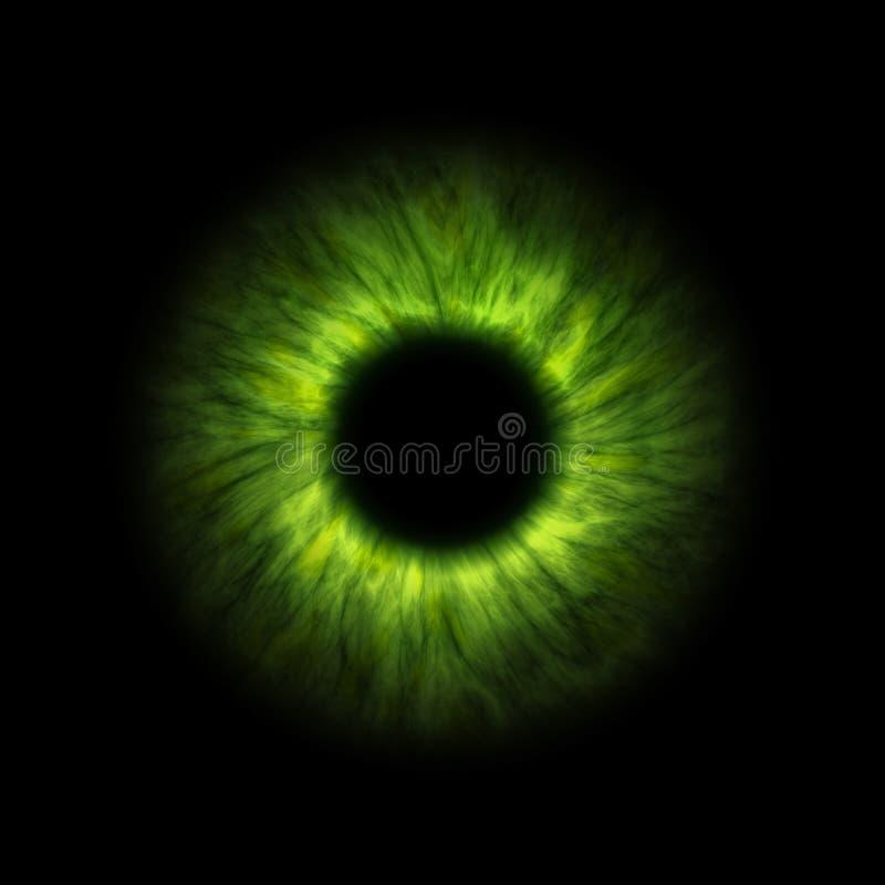Dark green human iris. An illustration of a dark green human iris royalty free illustration