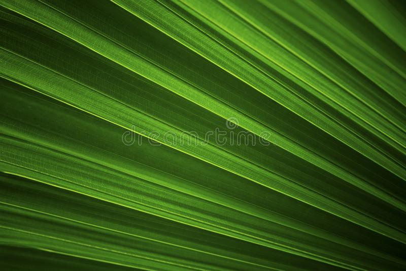 Dark green leaves background royalty free stock images