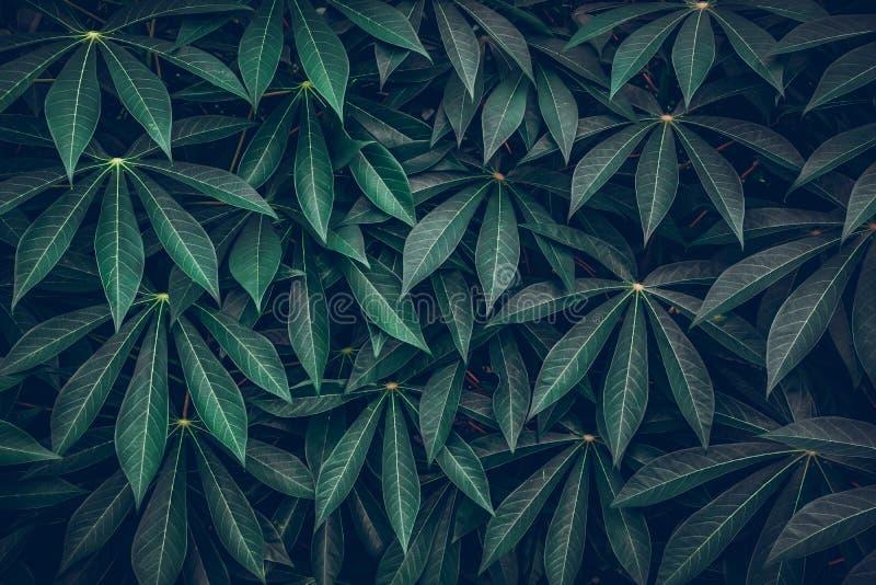 Dark Green Leaves Background Green Leaves Pattern Background