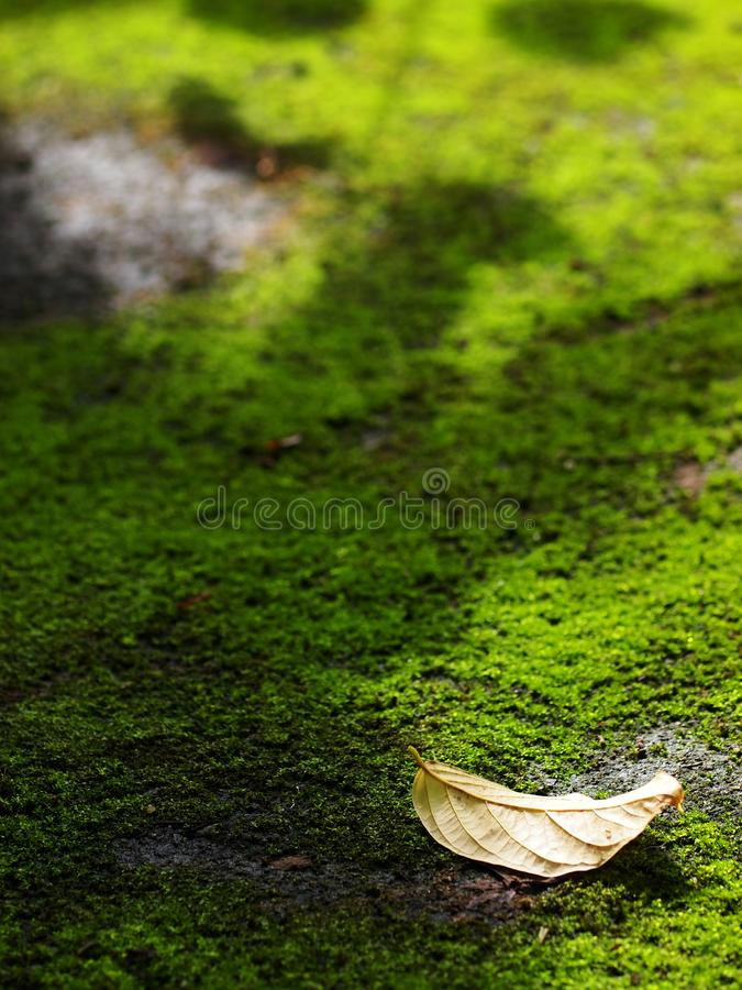 Dark green moss covering growing on wet old grunge rustic dirty concrete floor royalty free stock photography