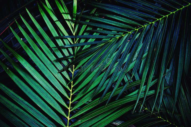 Dark green palm leaf texture background, tropical jungle tone concept royalty free stock photos