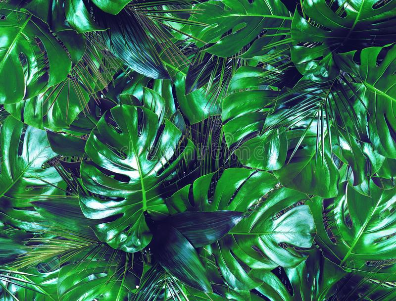 Dark green tropical leaves background stock image
