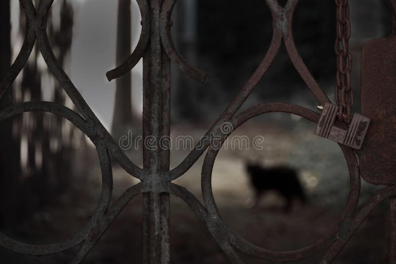 Dark grunge metal fence door with locking key and cat horror shadow for Halloween background. Dark grunge metal fence door with locking key and cat horror shadow royalty free stock photos