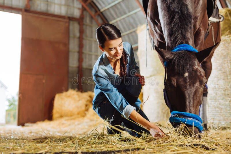 Dark-haired horsewoman giving some straw dark horse. Some straw. Dark-haired pleasant looking horsewoman giving some straw dark beautiful horse stock photos