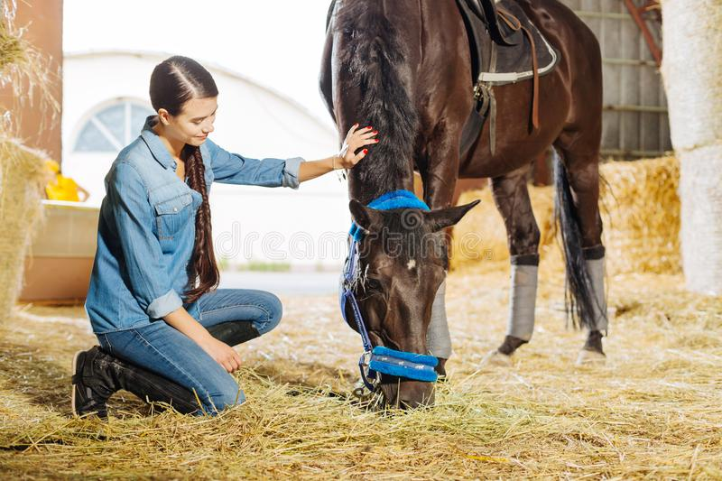 Dark-haired horsewoman with long braid visiting stable and horse stock photo