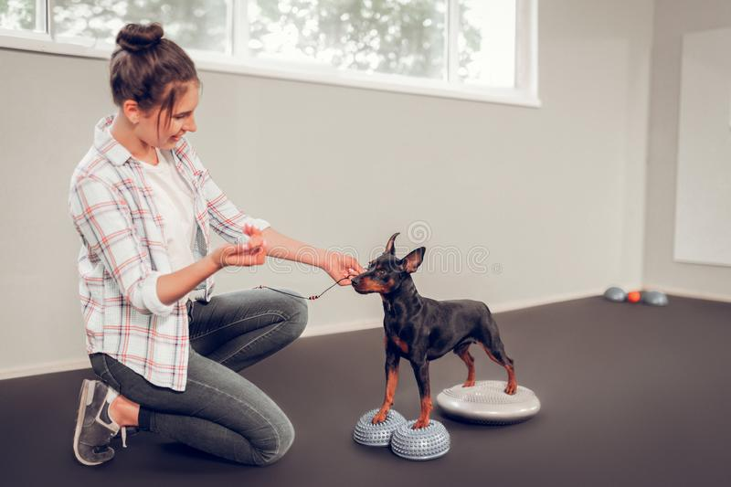 Dark-haired woman wearing jeans taking care of her black dog stock photography