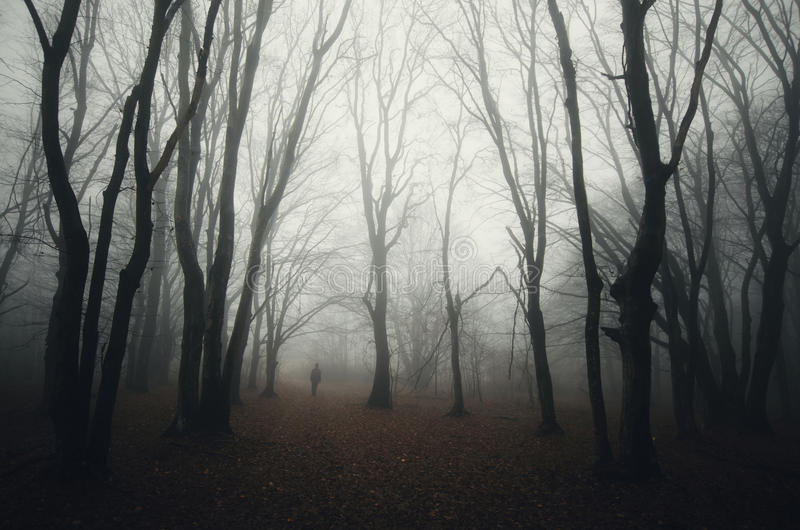 Dark haunted woods with man silhouette and fog. Dark haunted Halloween woods with man silhouette trough trees and mysterious fog stock photos