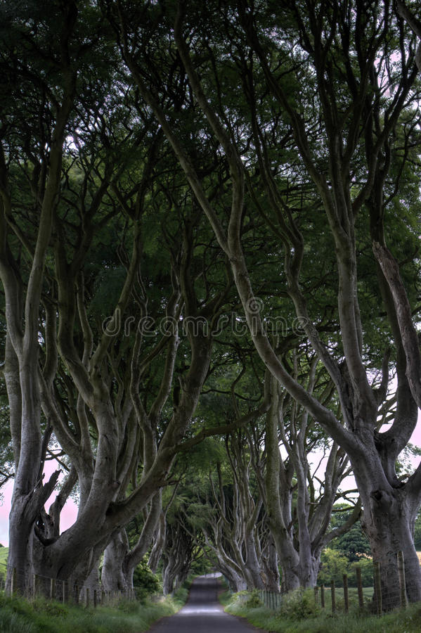 Dark Hedges, Gracehill House, stock photography