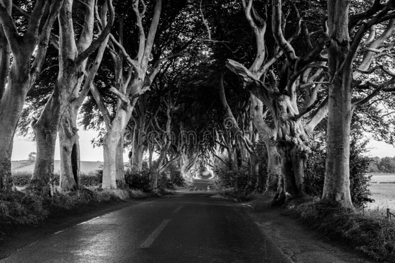 Dark Hedges from Game Of Thrones stock images