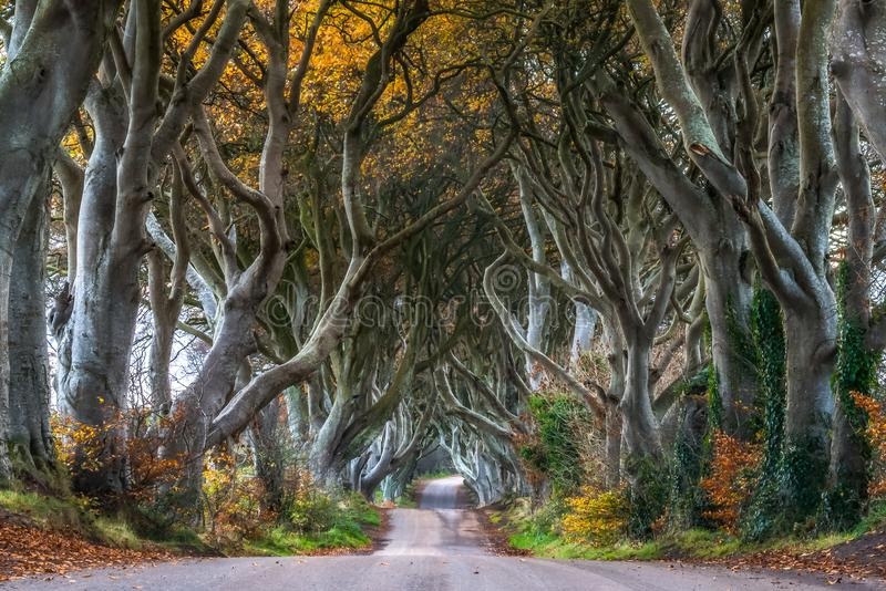 Dark Hedges Antrim Northern Ireland morning trees road way path stock image